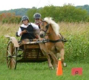 This attorney is also a horse enthusiast - driving the carriage