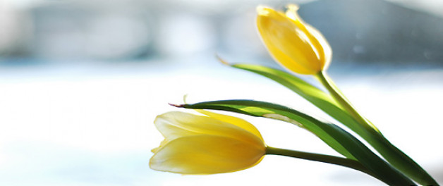 yellow tulips pictured - how to handle Mother's Day if you are a divorced dad?